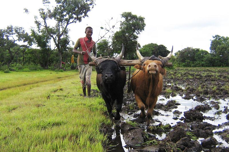Ihsan Foundation Farmers Assitance